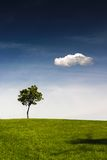 Lonely tree. A lonely tree is standing on the top of a hill. There is a clear blue sky above and a lonely white cloud Royalty Free Stock Photography