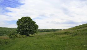 Free Lonely Tree Stock Image - 842011