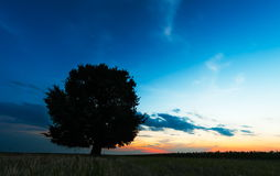 Lonely tree against a blue sky Royalty Free Stock Image