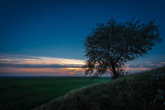 Lonely tree against a blue sky Stock Photos