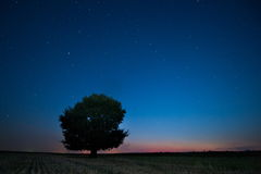 Lonely tree against a blue sky Royalty Free Stock Images