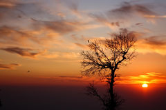 The lonely tree against a fascinating sunset Royalty Free Stock Images