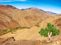 Lonely tree against red mountains Stock Photo