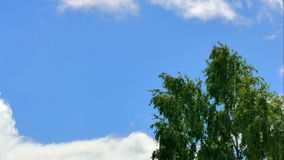 Lonely tree  against sky with clouds. Timelaps stock video footage