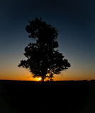 Lonely tree against the sunset. Stock Photography