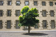 Lonely tree against wall background. Urban landscape Stock Photos