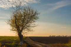 Lonely tree beside agricultural fields Stock Images