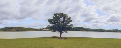The lonely tree royalty free stock images
