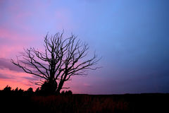 Lonely tree. Aphyllous tree after the sunset Stock Photo