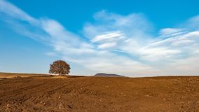 Lonely tree on arable land. At evening Stock Images