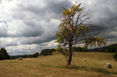 Lonely tree as an expression of solitude Royalty Free Stock Photography