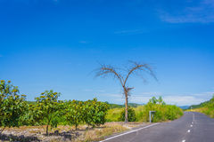 Lonely tree as heart in the road Royalty Free Stock Images