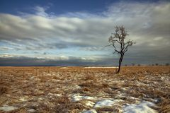 Lonely Tree At Valley Royalty Free Stock Photography
