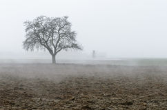 Lonely tree on Austrian field appearing out of the haze Stock Photography