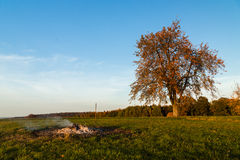 Lonely tree in autumn Stock Photography