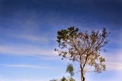 Lonely tree in autumn against sunset sky Royalty Free Stock Photography