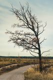 Lonely tree on autumn cloudiness weather stock photos