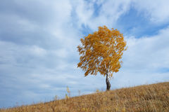Lonely tree in autumn. A lone tree in the fall in bad weather in the mountains Stock Photos
