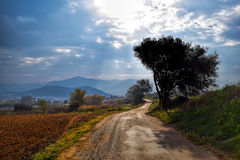 Lonely tree in autumn mountain and country road, sun rays from the sky Royalty Free Stock Images