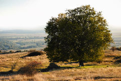Lonely tree. In autumn time Royalty Free Stock Image