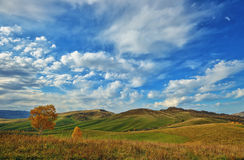 Lonely tree on the background of autumn in the mountains. R and grass Stock Photo