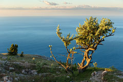 Lonely tree background of the Black Sea at sunrise on top of mountain Ilyas Kaya. Stock Photography