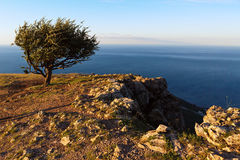Lonely tree background of the Black Sea at sunrise on top of mountain Ilyas Kaya. Royalty Free Stock Images