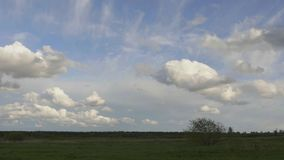 Lonely tree on a background of clouds. Meadow with a tree, clouds air, clear blue sky stock footage