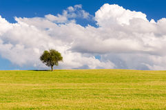 Lonely tree background Royalty Free Stock Images