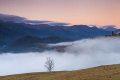 Lonely tree on a background of mist Royalty Free Stock Image
