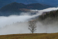 Lonely tree on a background of mist Stock Photos