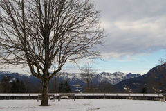 Lonely tree. On a background of mountains Royalty Free Stock Images