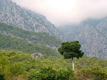 Lonely  tree on a background of the Taurus Mountains Stock Images