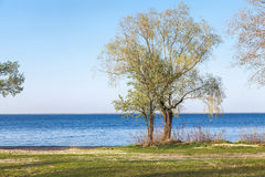 Lonely tree on bank of wide river Stock Photography
