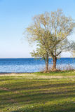 Lonely tree on bank of wide river Stock Photos