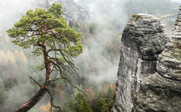 Lonely tree at Bastei, Germany Royalty Free Stock Images