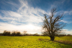 Lonely Tree in Bavaria Stock Image