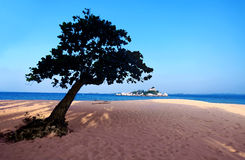 lonely tree on beach Stock Image