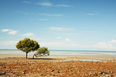 Lonely Tree on the beach. Queensland, Australia Royalty Free Stock Photo