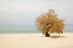Lonely tree on the beach, the blue sky and sea Stock Photos