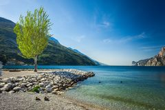 Lonely tree on a beach of lake Garda in Torbole royalty free stock images