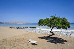 Lonely tree on the beach in Lima, Peru Stock Image