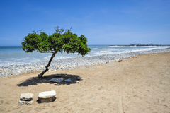Lonely tree on the beach Stock Photography