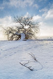 Lonely tree on the beach with snow Stock Images