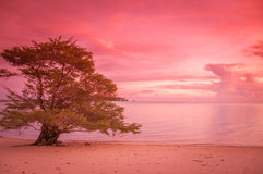 Lonely tree at the beach. In the sunset Stock Photo