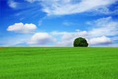 Lonely tree Beautiful landscape Stock Photography