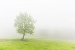 Lonely tree with beautiful light and fog Stock Images