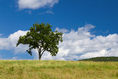 Lonely tree. Beautiful summer landscape with a lonely tree Stock Photography