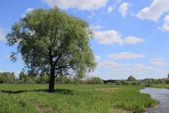 Lonely tree. Beautiful summer landscape with lonely tree at the small river royalty free stock image