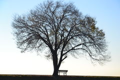 Lonely tree and bench Stock Images
